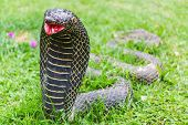 stock photo of garden snake  - The Statue Of The Snake In Garden  - JPG
