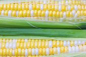 picture of corn-silk  - Close up row of the fresh cooked corn - JPG