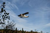picture of float-plane  - Small float airplane taking off over the woods - JPG