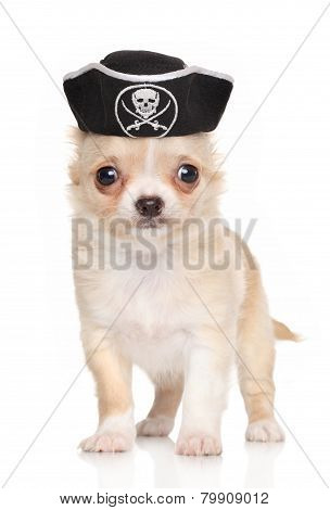 Chihuahua Puppy In Pirate Hat