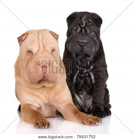 shar pei dog with a puppy