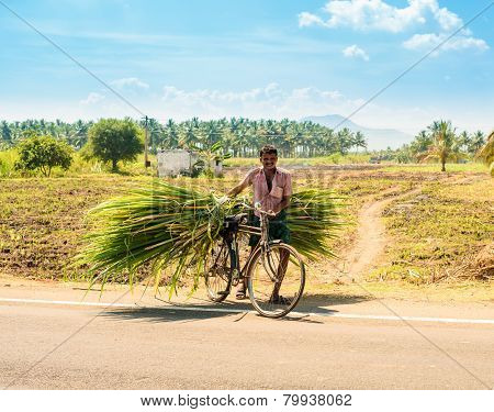 Madurai, India - February 17: An Unidentified Man On A Rural Road On A Bicycle Carries Cane Leaves.