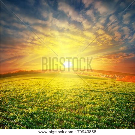 Meadow With Green Grass