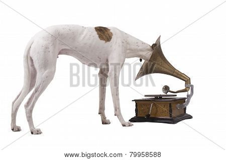 Dog And Old Gramophone