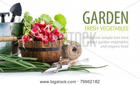 Fresh radish and green onion with garden tools. Isolated on white background