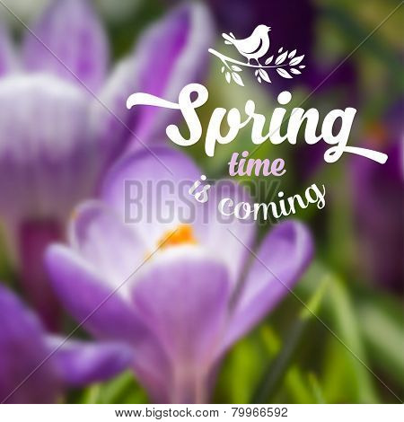 Spring blurred background with beautiful crocus flower. Vector illustration.