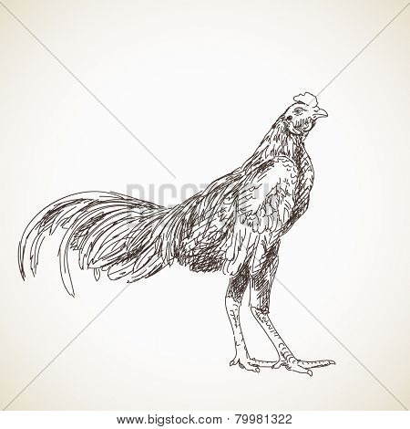 Sketch of asian rooster, Hand drawn vector illustration