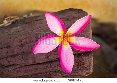 Frangipani Tropical Flowers On Wood Background