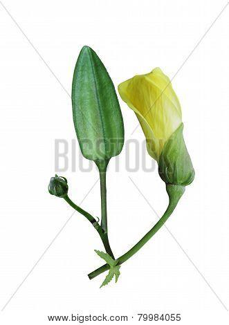 Kenaf Flower
