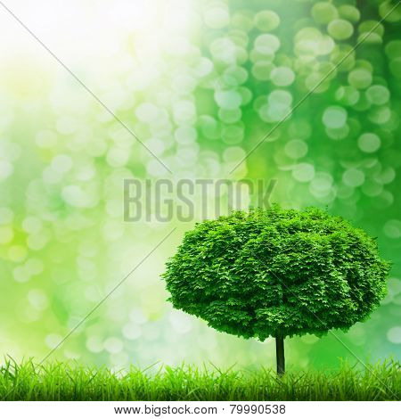 green grass on the green tree backgrounds