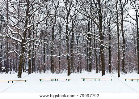 Benches And Trees Under Snow In City Park