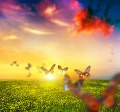 stock photo of daisy flower  - Colorful butterflies flying over spring meadow with flowers - JPG