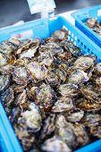 image of oyster shell  - fresh oysters on mediterranean street market - JPG
