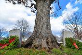 picture of arlington cemetery  - Washington DC  - JPG