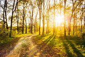 foto of orange-tree  - Path Road Way Pathway On Sunny Day In Summer Forest - JPG