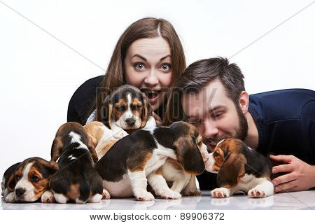 The man, woman and big group of a beagle puppies