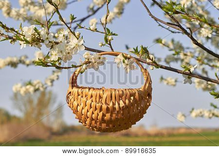 Empty basket and bouquet of flowers in the garden with white bloom