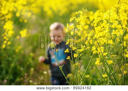 Boy Running In A Field Of Blooming Yellow Colza