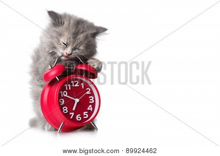 Adorable Kitten With Red Alarm-clock Isolated Copyspace