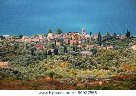 Village Pai, Garda Lake Shore, Olive Grove