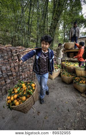 Farmer Carrying Baskets With Shoulder Pole On Outdoor, Guangxi, China.