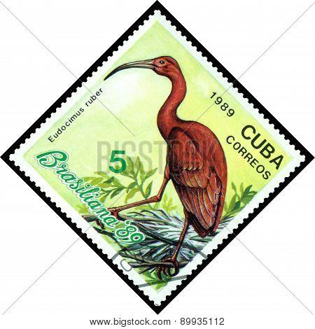 Vintage  Postage Stamp.  Bird Eudocimus Ruber.