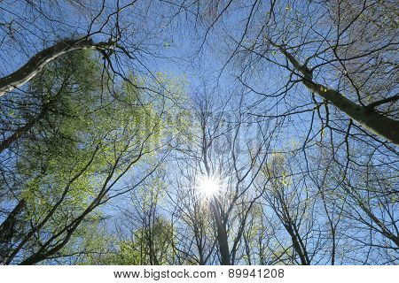 Sun Shines Through Trees