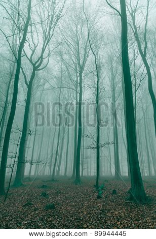 Fantasy Forest In The Fog In Green