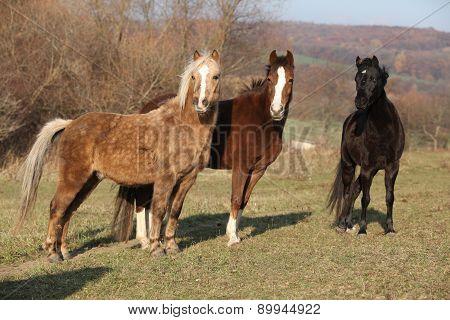 Batch Of Horses On Autumn Pasturage
