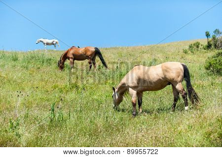 Three Horses Eating On Hillside Field
