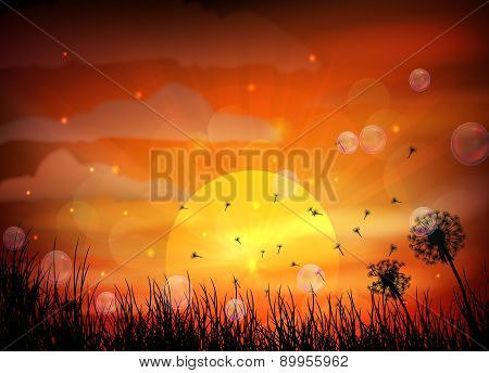 Silhouette of dragonfly with sunset