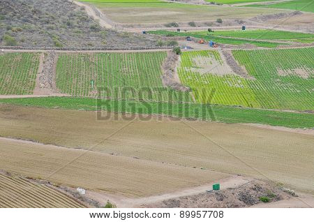 View of Cultivated Field
