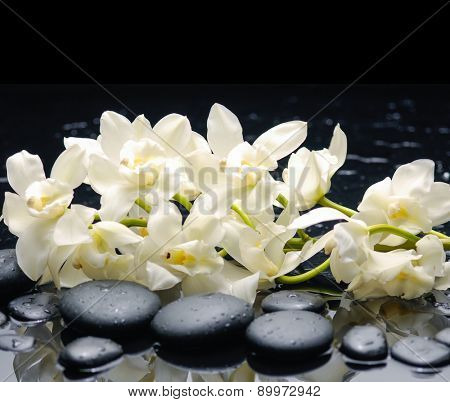 Lying down white orchid blossom with wet stones