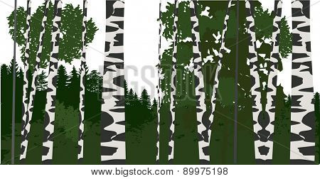 illustration with green birch forest