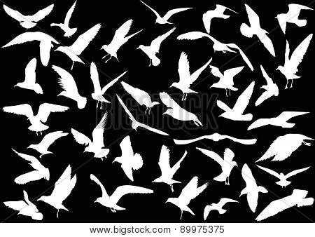 illustration with gull silhouette collection on black