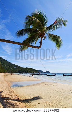 Sun Ligt Asia   The  Kho Tao Bay   Beach    Rocks  Boat   Thailand   Anchor