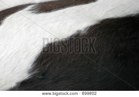 Cow Hide 2