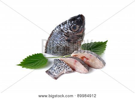 Portion Of Fresh Tilapia Fish On White Background