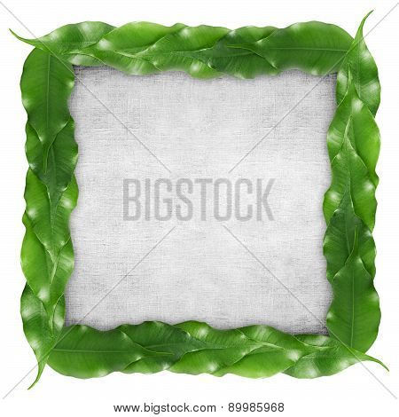 ficus leaf frame