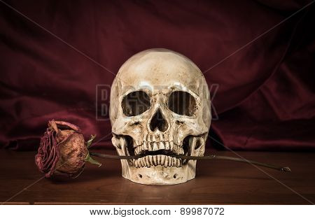 Still life white human skull on wooden table