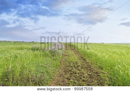 Landscape Of Green Barley Field