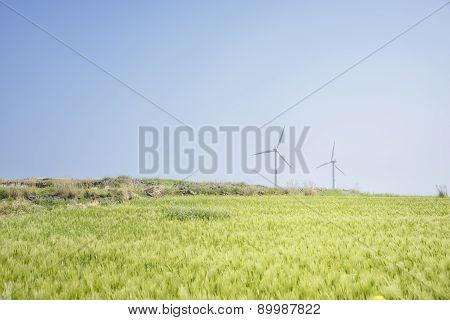 Landscape Of Gapado Island