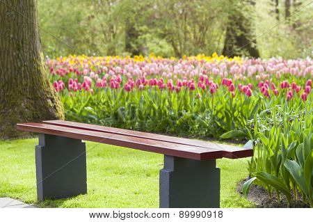 Wooden Chair In A Tulip Colourful Park