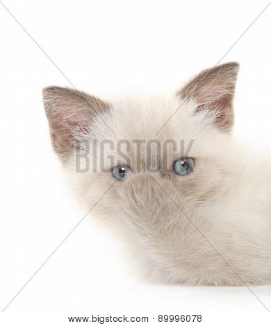 Cute Kitten With Paws Over Its Nose