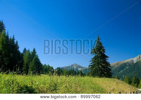 Meadow In Tirol