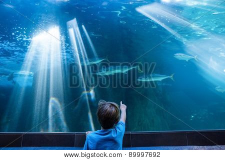 Young man pointing fish in a tank with his finger at the aquarium