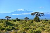 picture of kilimanjaro  - Mount Kilimanjaro in Kenya Amboseli National Park - JPG