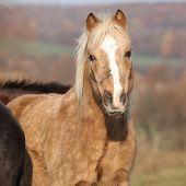 foto of pony  - Adorable pony standing on pasturage in autumn - JPG
