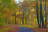 foto of foliage  - Colorful trees foliage in National Arboretum Washington DC - JPG