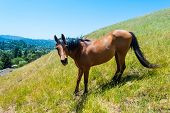 image of horses eating  - Horse standing on a hill eating grass - JPG